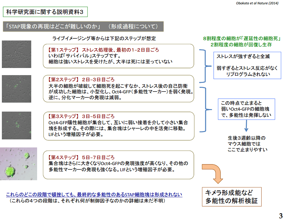 会見資料の画像3