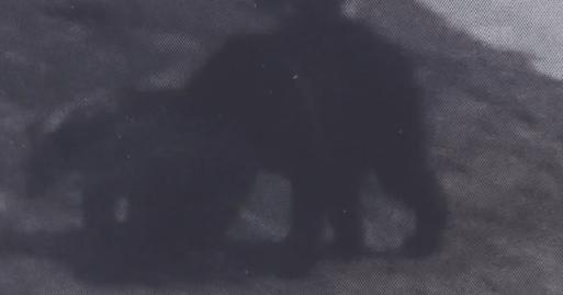 ヒグマの画像
