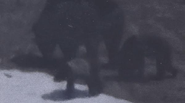 ヒグマの親子3頭の画像