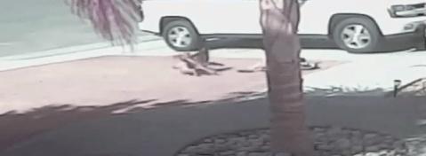 タラが犬に突撃する画像