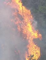 山火事現場の画像