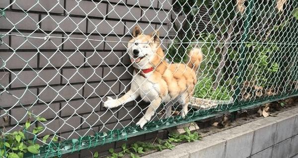 フェンスに挟まった犬の画像