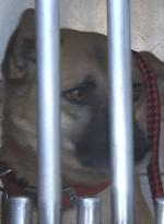 噛み付いた犬の画像