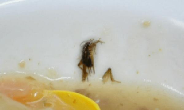 コオロギの画像