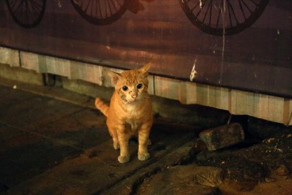 八幡市内里砂畠で子猫切断の動物虐待事件のイメージ画像