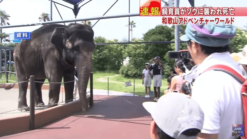 和歌山県白浜町の「アドベンチャーワールド」でゾウが暴れる死亡事故ニュースのキャプチャ画像