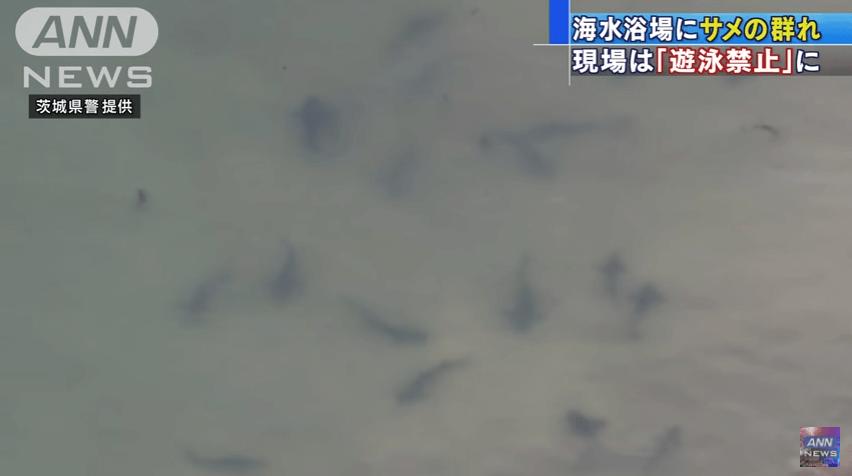 久慈浜海水浴場にドチザメ30匹のニュースキャプチャ画像