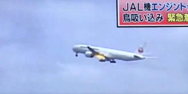 バードストライクで羽田空港に緊急着陸のニュースキャプチャ画像