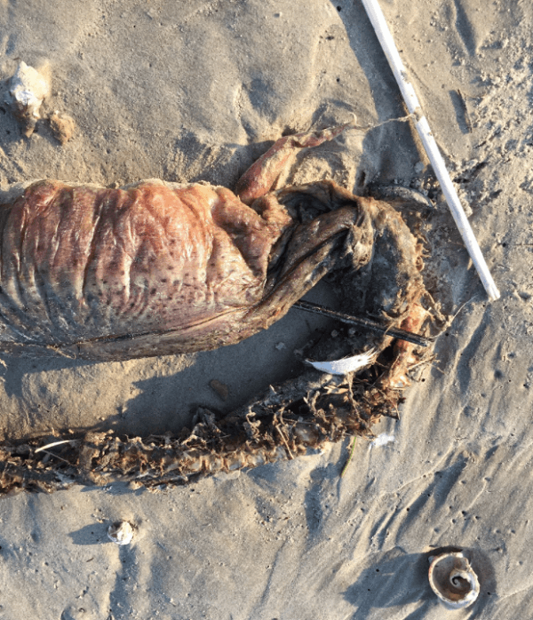 Twitterに投稿された未確認生命体の画像