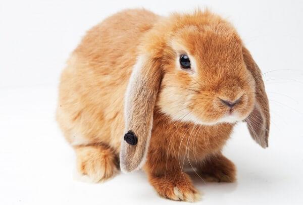 横浜市港北区にウサギの死骸の動物虐待事件のイメージ画像