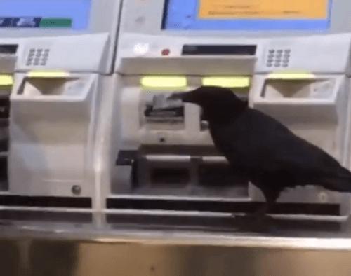 東京都内の駅でカラスがICカード奪い切符を購入しようとする動画のキャプチャ画像