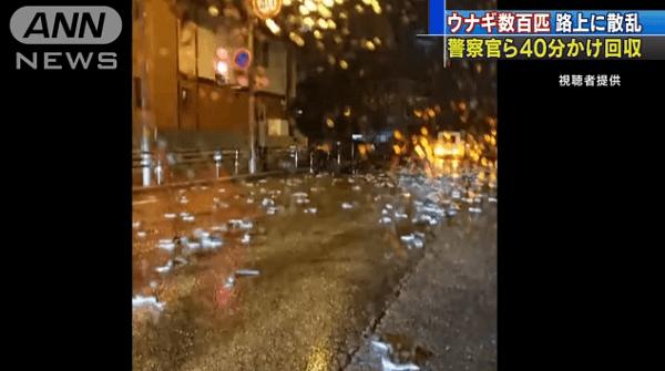 三重県桑名市でうなぎが散乱している現場の画像