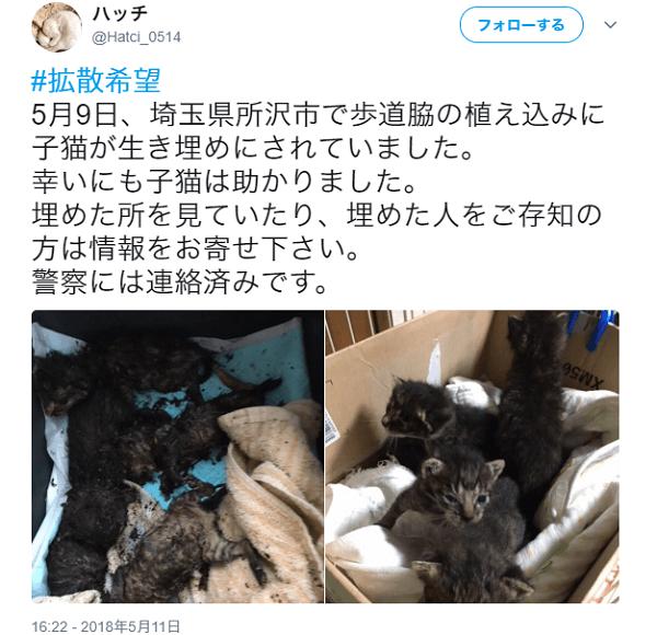 子猫生き埋め事件のTwitterの画像