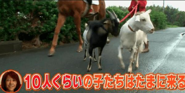 1月19日放送の志村どうぶつ園で白井家に2週間密着した画像